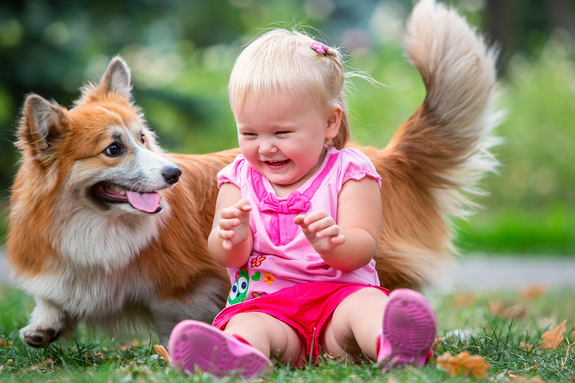 Kids, corgi, welsh corgi, dogs, Fox, Pembroke, Girl, light, happiness