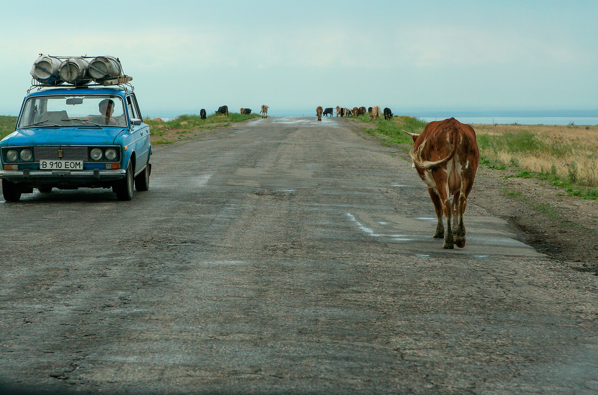 Country road, Almaty, Kazakhstan, soviet car, cow