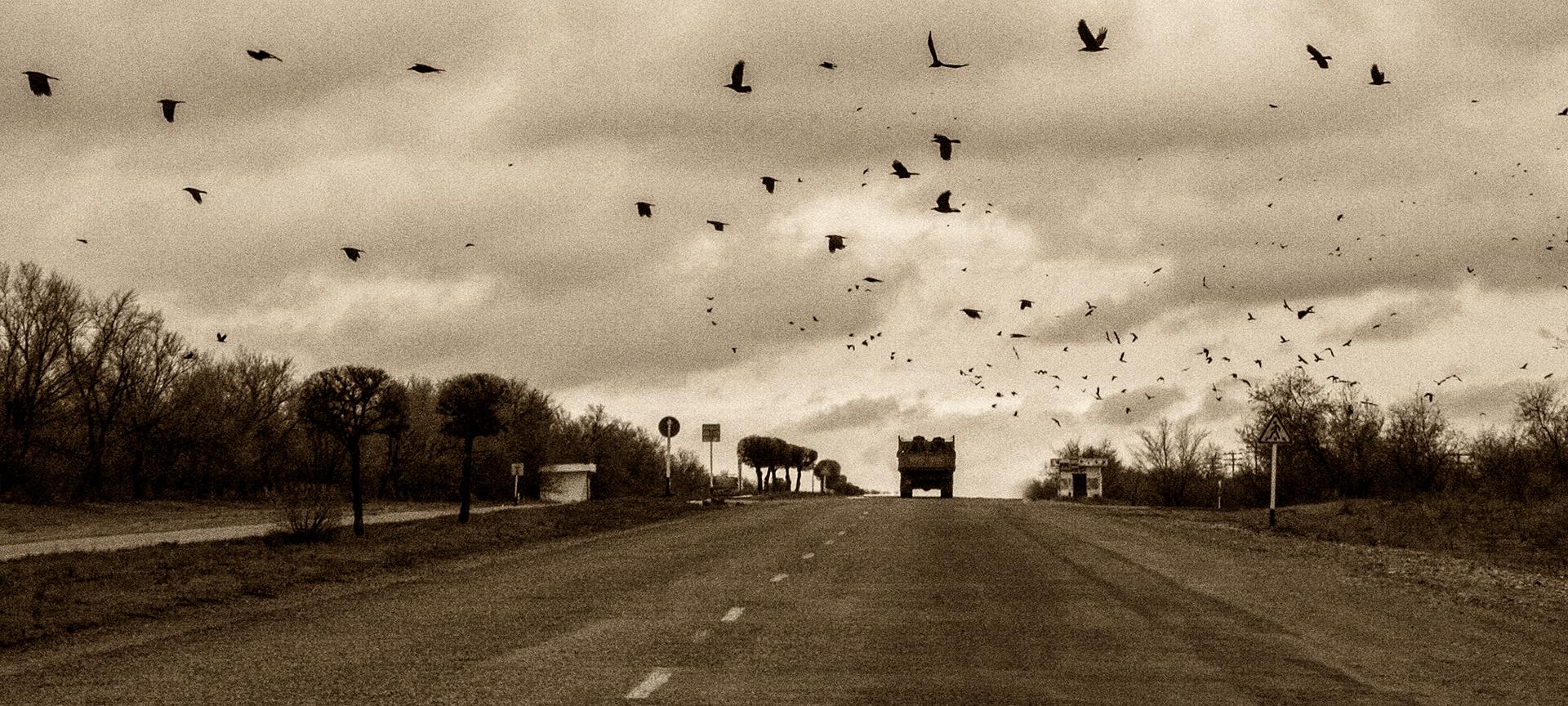 Kapchagay highway, Kazakhstan, crows, birds