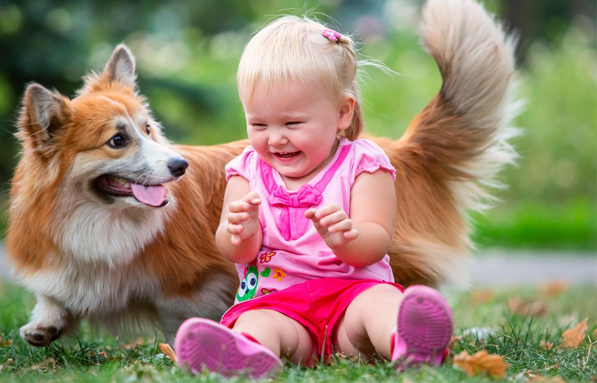 Kids, corgi, welsh corgi, dogs, Fox, Pembroke, Girl, light, happiness