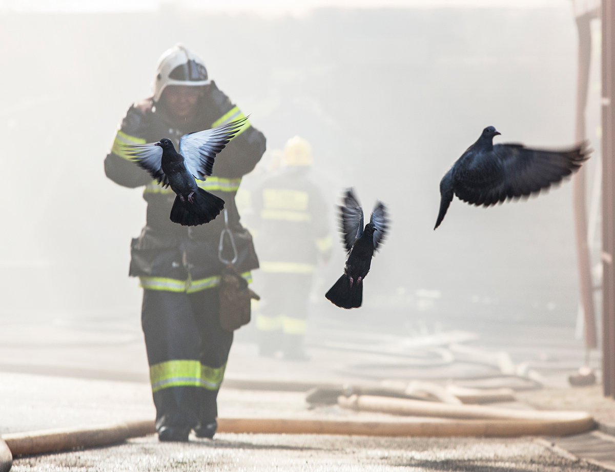 Firefighters, pigeons, fire, almaty, kazakhstan